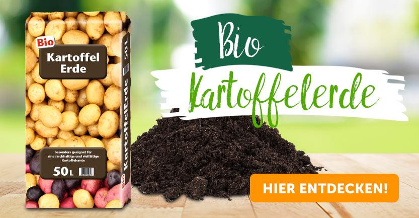 Kartoffel Sieglinde Eigenschaften
