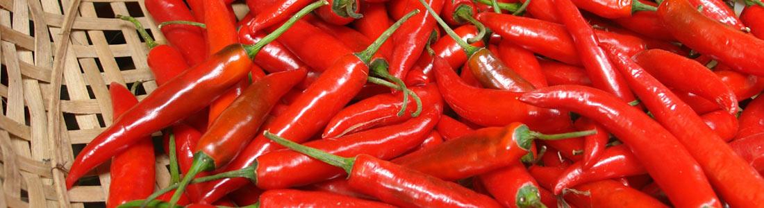chili pflanzen pflege und rezepte von g rtner p tschke. Black Bedroom Furniture Sets. Home Design Ideas