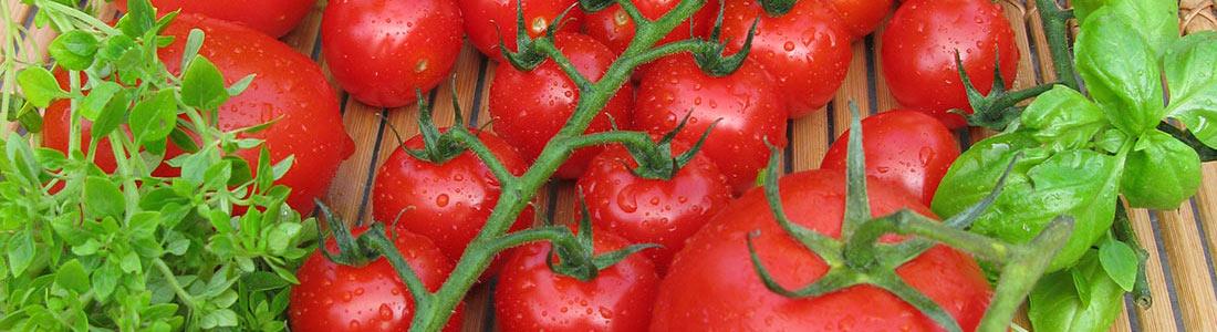 tomaten pflanzen pflege und rezepte von g rtner p tschke. Black Bedroom Furniture Sets. Home Design Ideas