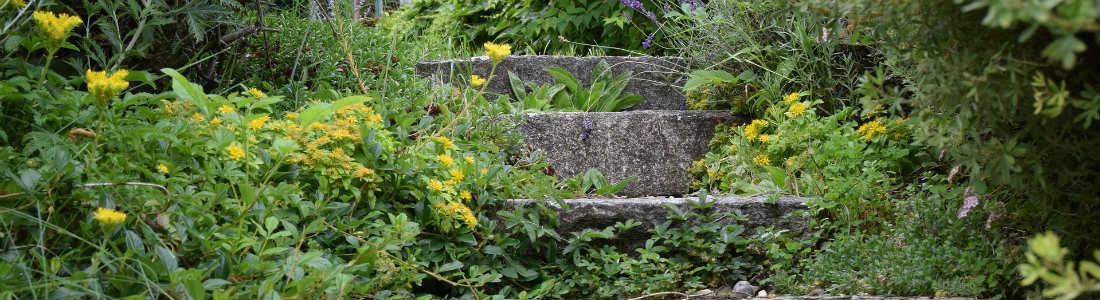 Steinstufen von Pflanzen überwachsen