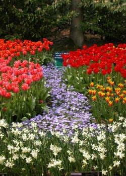 Bunte Frühjahrsblüher Blumenzwiebeln