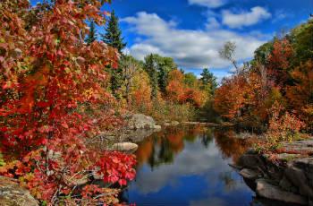 Herbststauden und Gräser
