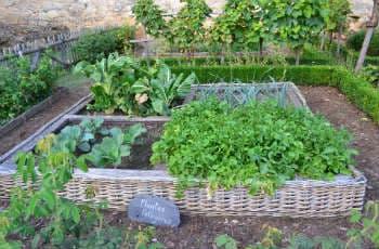 Ein Hochbeet mit Gemüsepflanzen