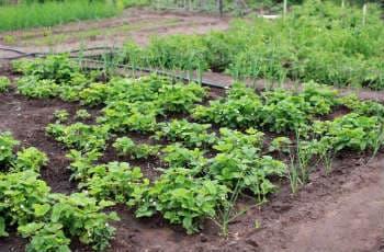 Gemüsebeete auf freier Fläche