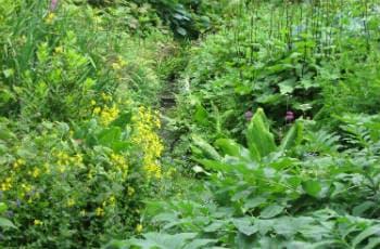 Bepflanzung mit Stauden: Schatten