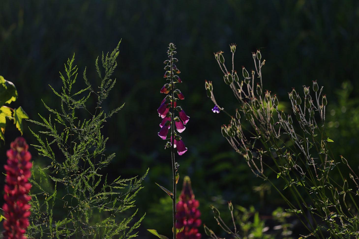 Verschiedener Pflanzenaufbau