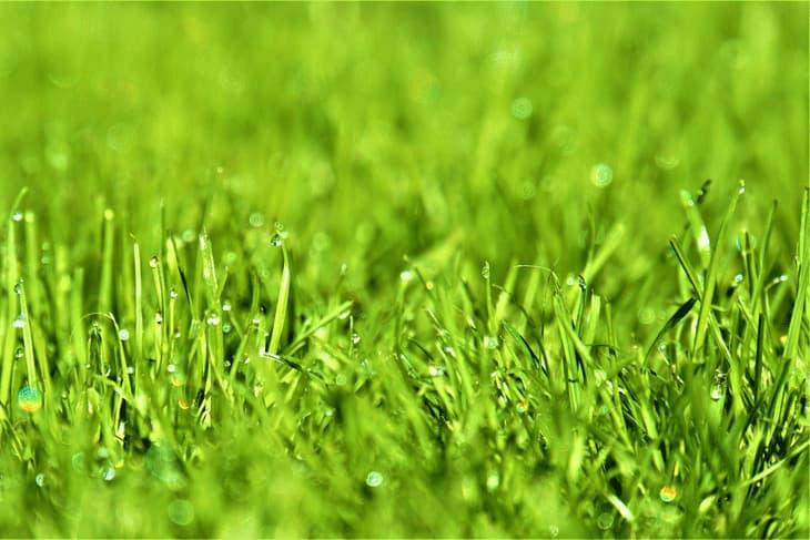 Rasen mit Tau Nahaufnahme