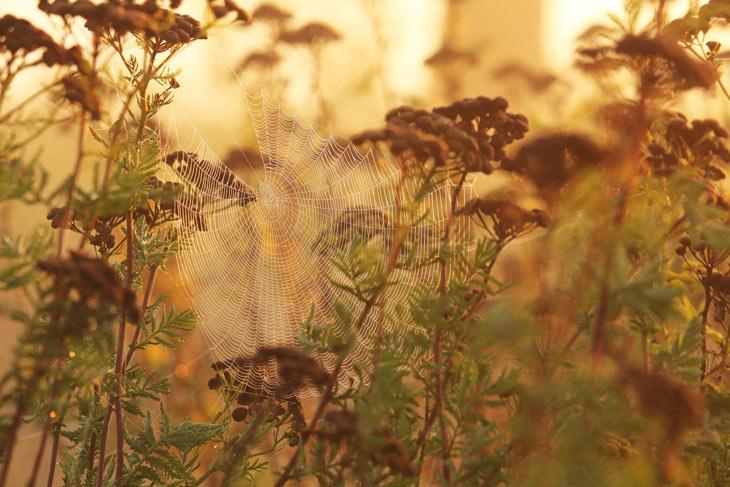 Schafgarbe in der Herbstsonne