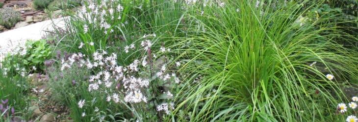 Gras in Staudenbeet