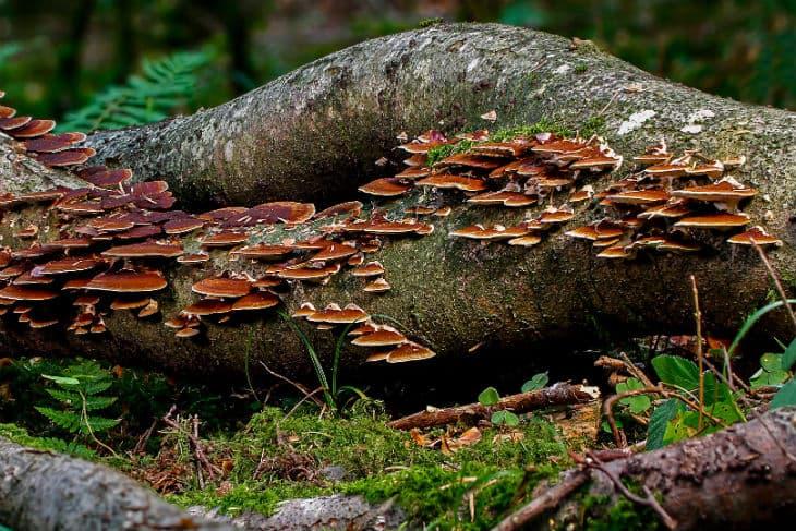 Pilze auf einem liegenden Baumstamm