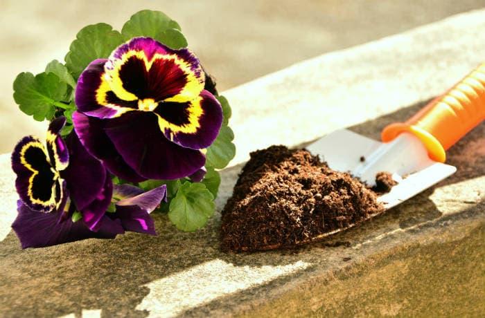Balkonpflanze mit einer Pflanzschaufel voll Erde