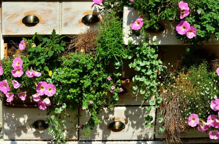 Balkonpflanzen gepflanzt in einer alten Holzkommode