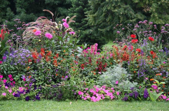 Buntes Sommerblumen-Beet