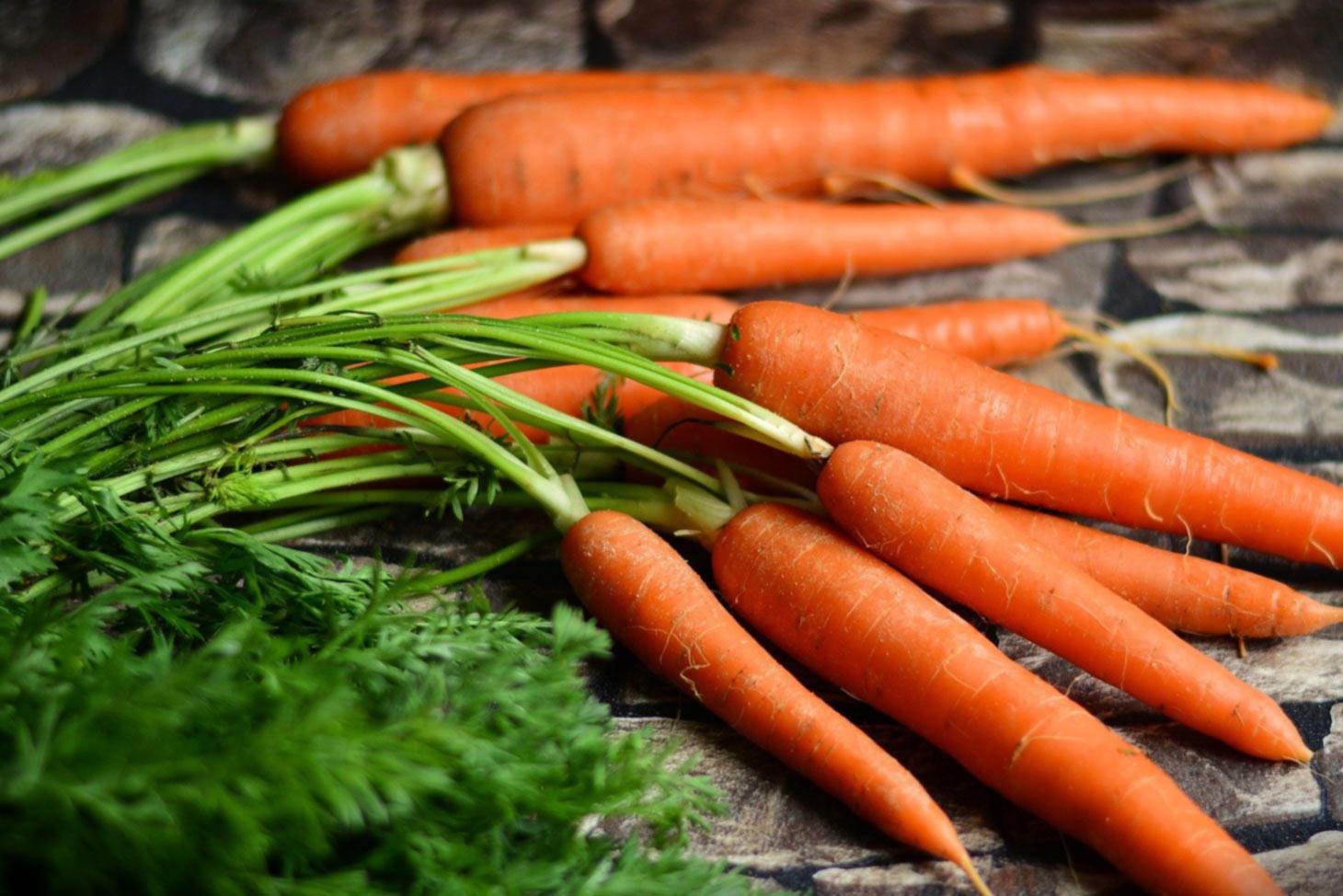 Frische Karotten Möhren