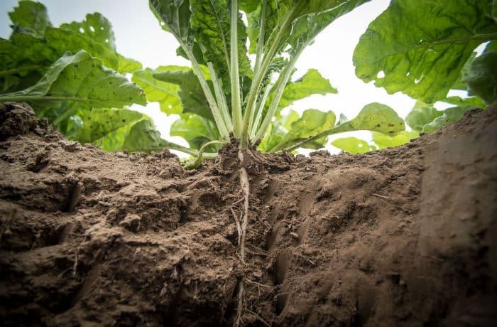 Pflanze mit Wurzeln im Boden