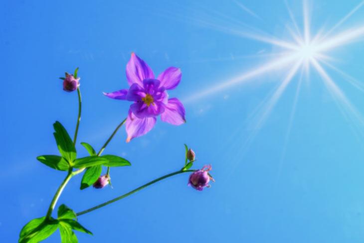 Sonnenschein blauer Himmel Akelei