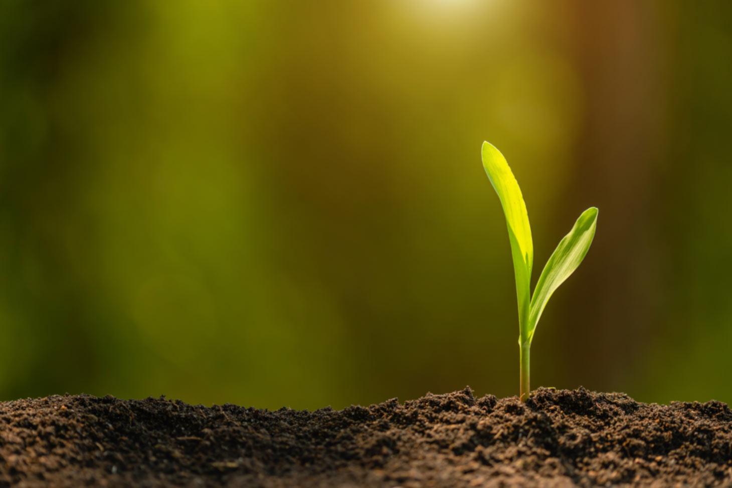 Junger Pflanzensämling in Anzuchterde