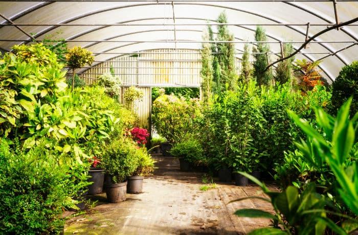 Kübelpflanzen im Gewächshaus