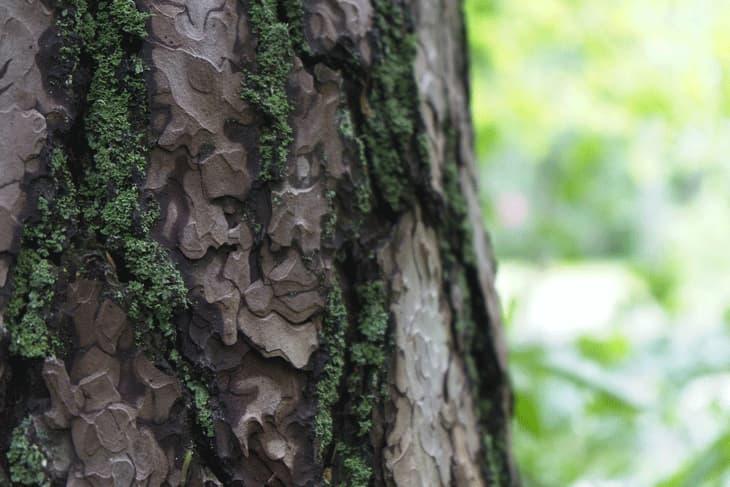 Baumrinde als Lebensraum für Insekten