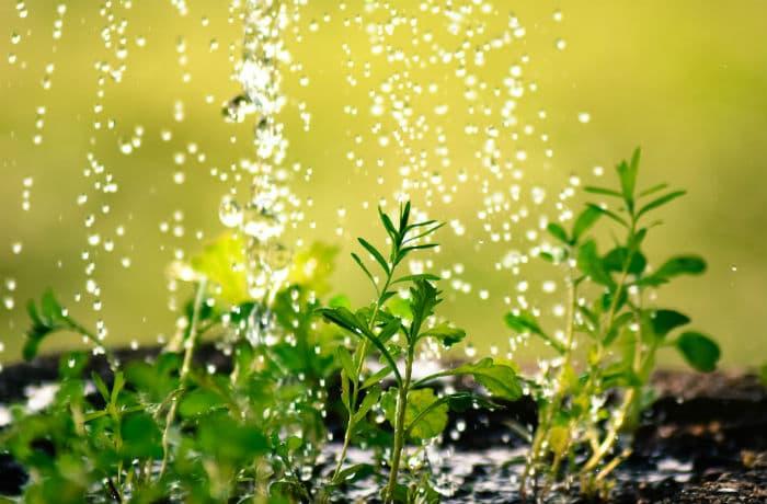 Sommerblumen-Bepflanzung in weiss
