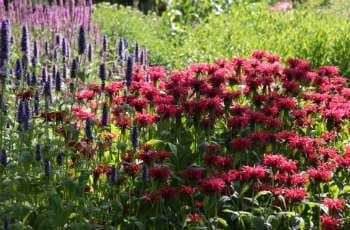 Winterharte Blütenstauden: Pflegeleicht und robust