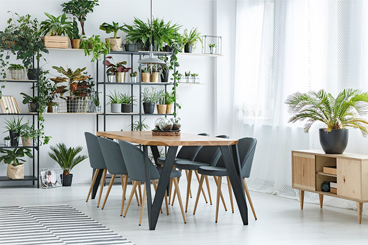 Esszimmer mit Zimmerpflanzen im Regal im Hintergrund