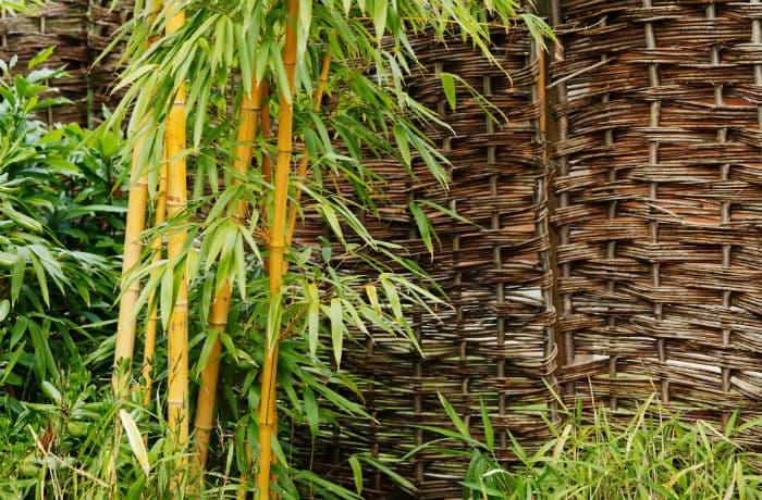 Bambus vor einer Sichtschutzwand