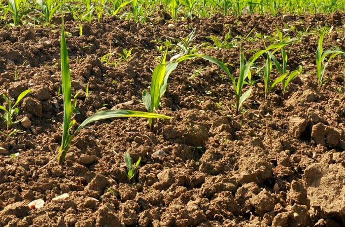 Boden auf dem Sämlinge wachsen