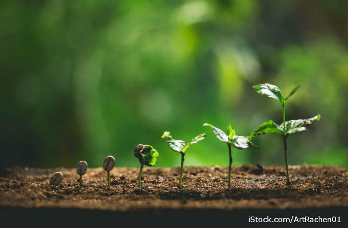 Wachstum einer jungen Pflanze dank Dünger