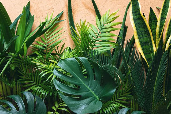 TOP schöne Zimmerpflanze Bergpalme verbessert das Raumklima Samen Topfpflanze