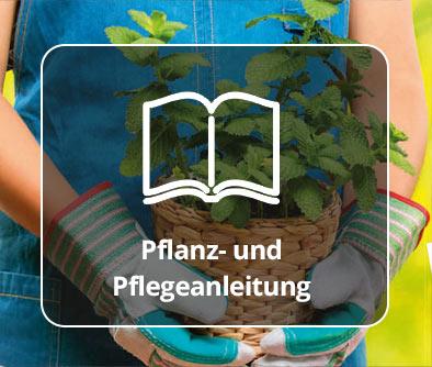 Pflanz- und Pflegeanleitung