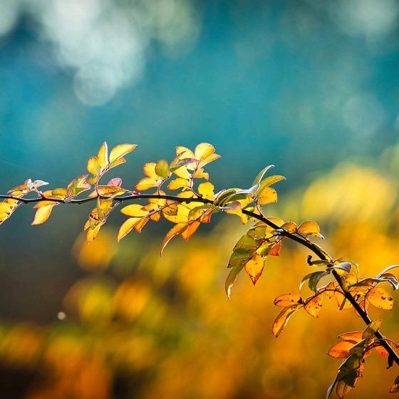 Rosen Ranke Herbst