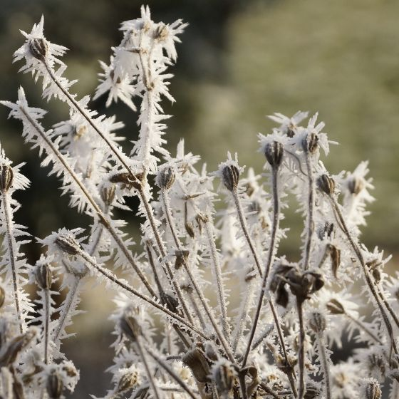 Winter Pflanzen Raureif Eis