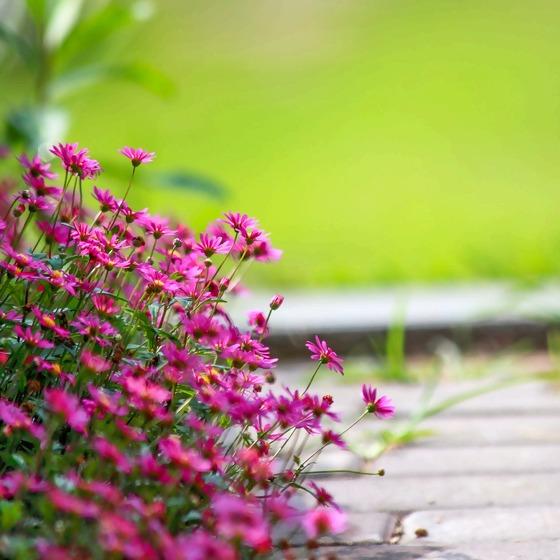 Pflanzen Weg