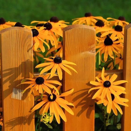 Gartenzaun mit Sonnenhut