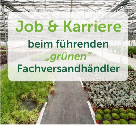 header-karriere-marketing-4_1.jpg