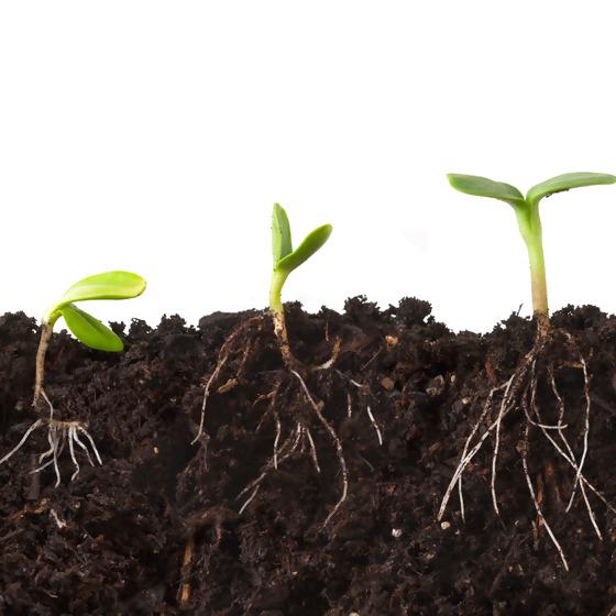 Vom Samenkorn zur Pflanze