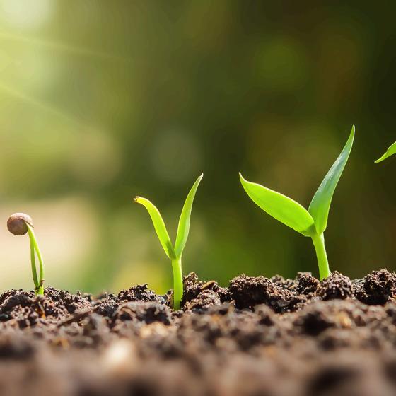 Pflanzen vom Keimling zur Jungpflanze
