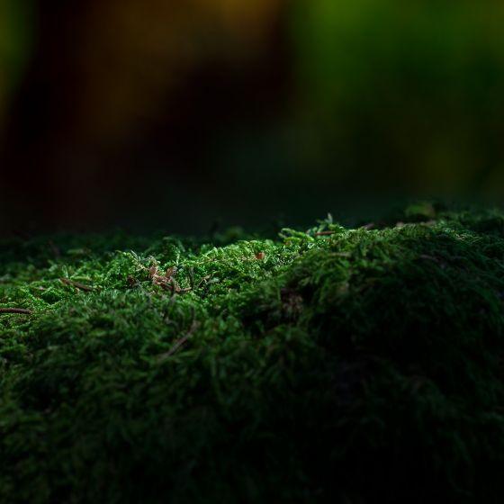 Schatten Natur Moos
