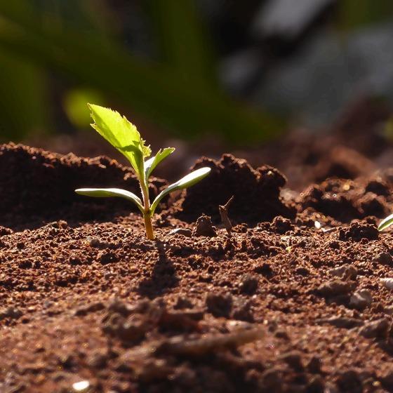 Junge Pflanze im Gartenboden