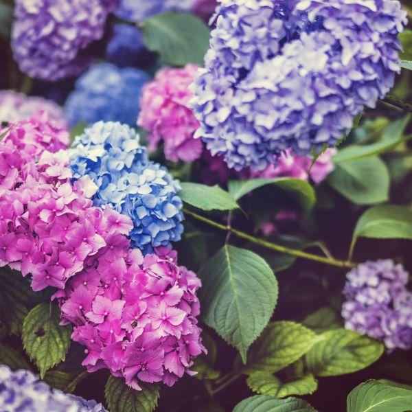 beautiful-1845599_1920_1.jpg