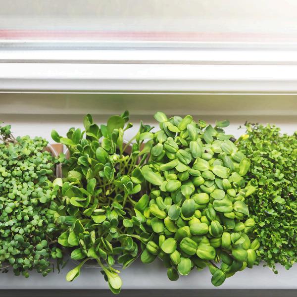 Pflanzenanzucht auf der Fensterbank - so wirds gemacht