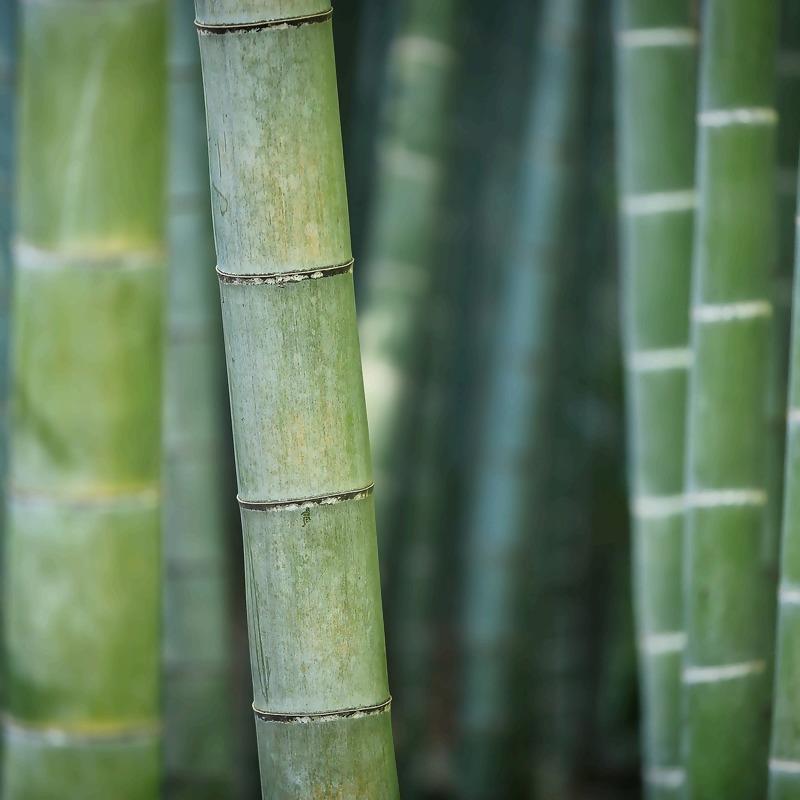 bamboo-3028709_1920_1.jpg
