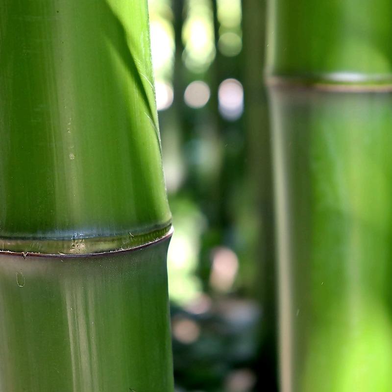 bamboo-5404767_1920_1.jpg