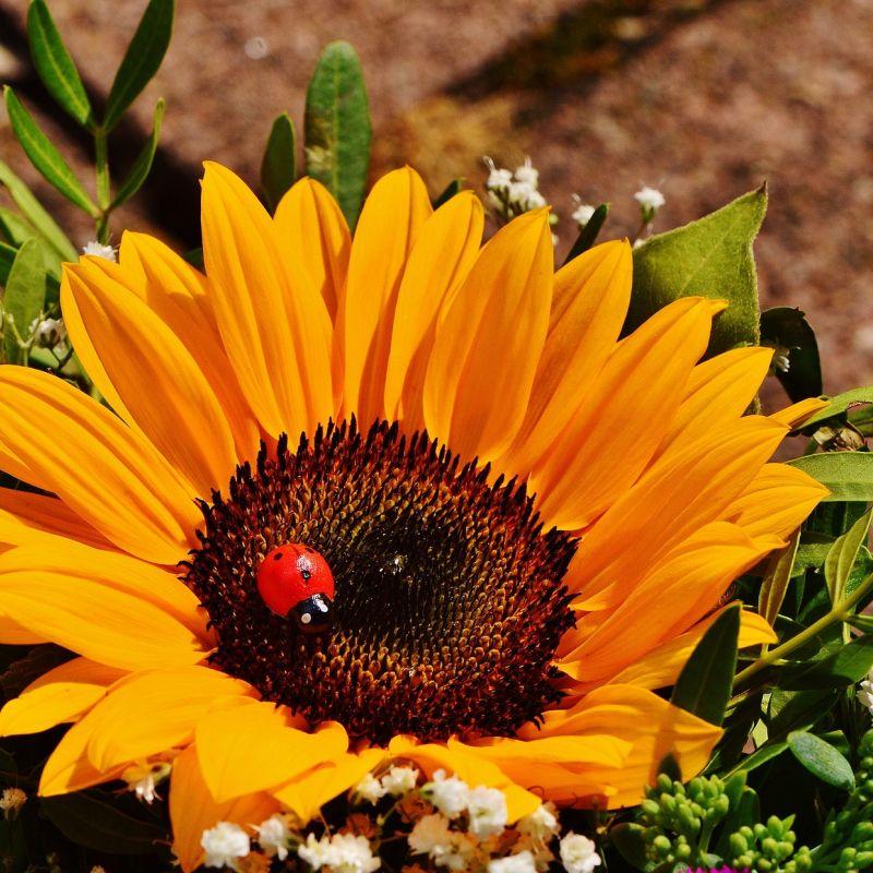 bouquet-1517403_1920.jpg
