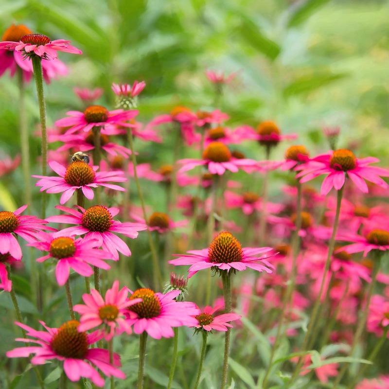 daisies-1543690_1920_2.jpg