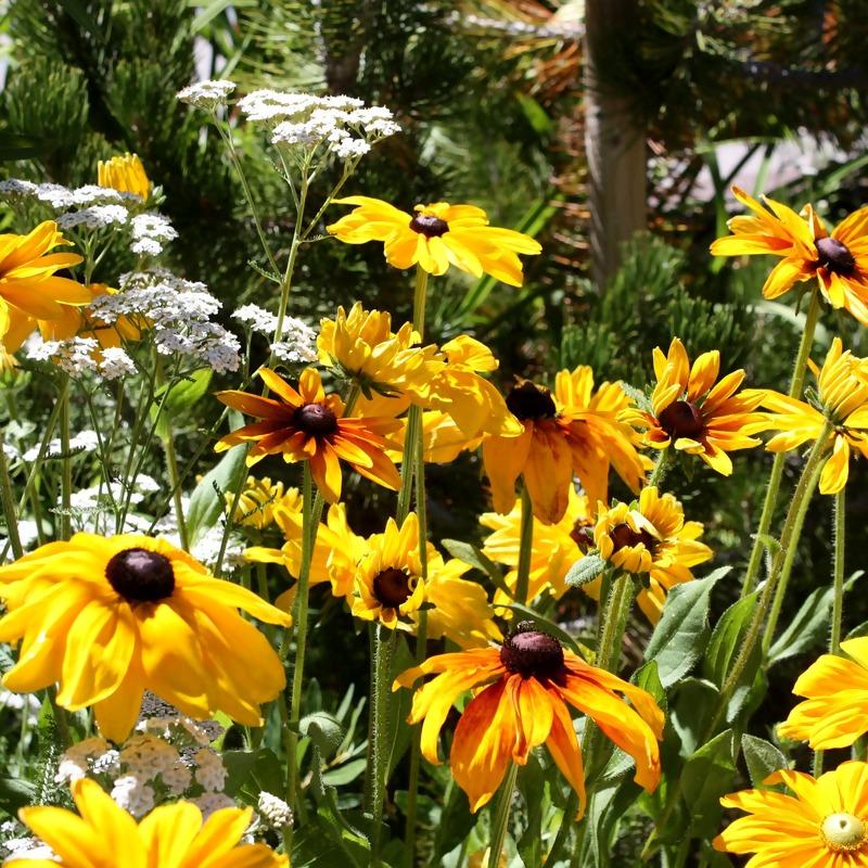 flower-1340062_1920_1.jpg