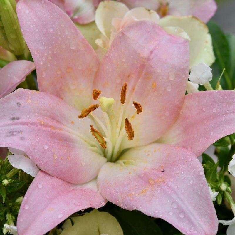 flower-4276697_1920.jpg