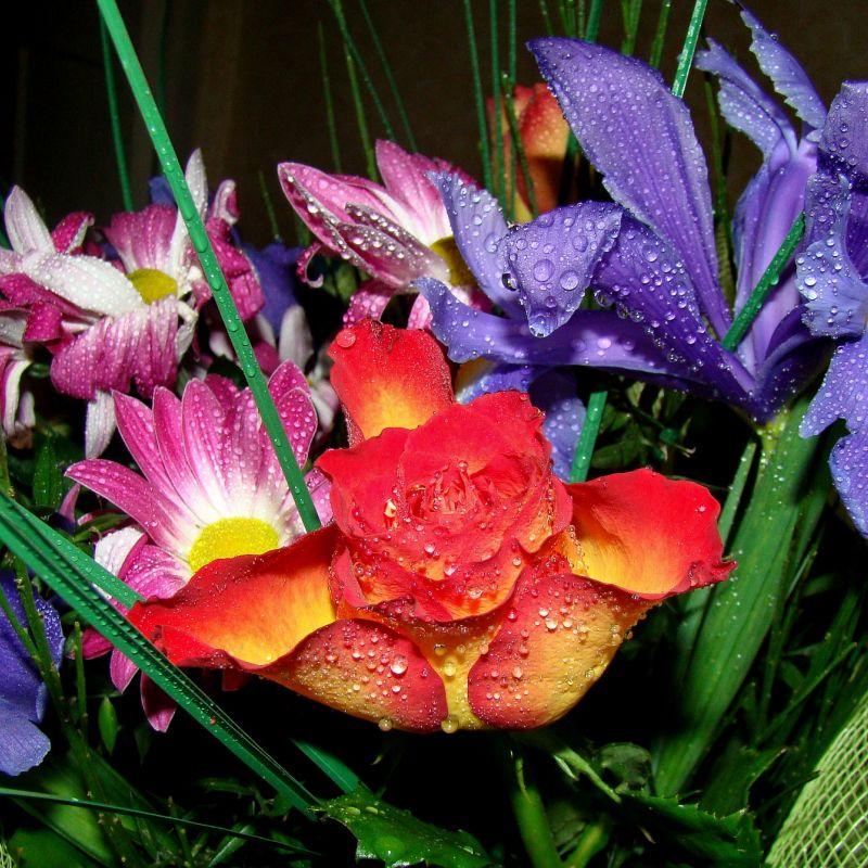 flowers-1753307_1920.jpg