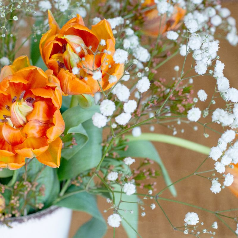flowers-4055512_1920.jpg